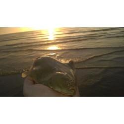 Meath Flounder